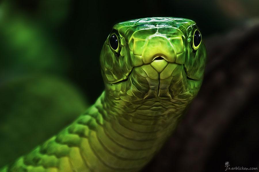 Любопытный змей