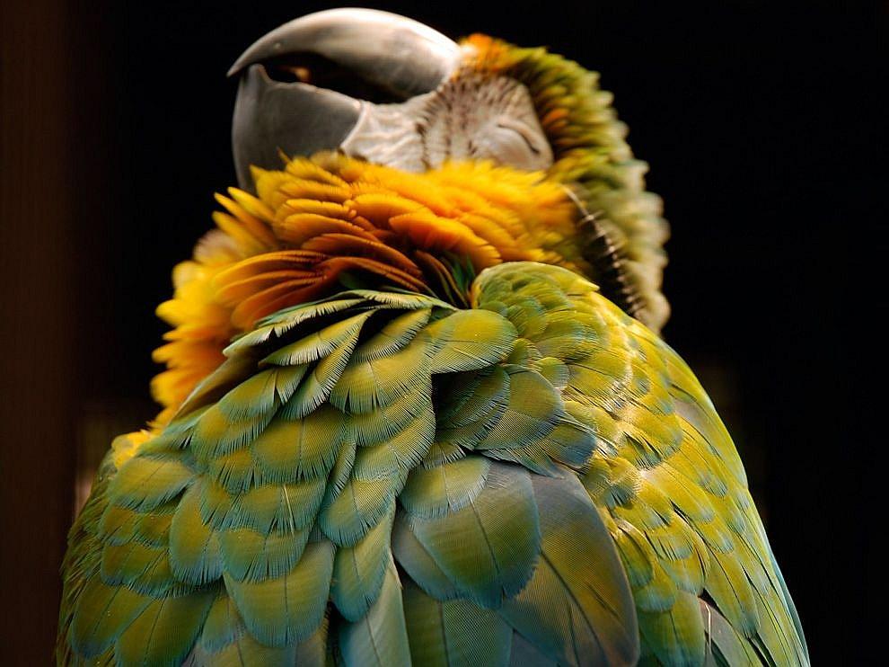 National Geographic: лучшие фотографии июля