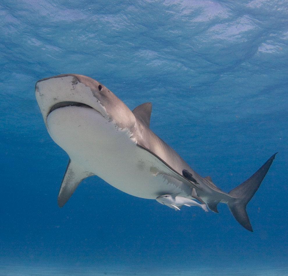 Секс у акул 10 фотография
