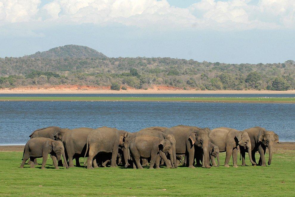 Перепись слонов
