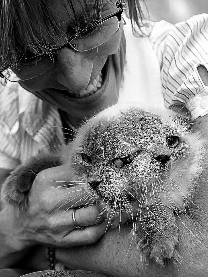Кот с двумя мордами попал в Книгу рекордов Гиннеса