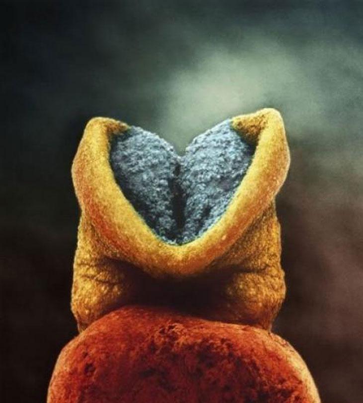 Уникальные снимки: рождение новой жизни