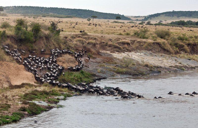 Как бегемот спасал антилопу от крокодила
