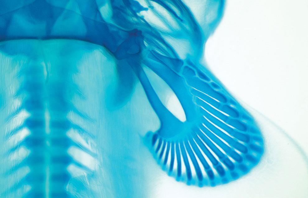 Конкурс микрофотографии от Никон 2011