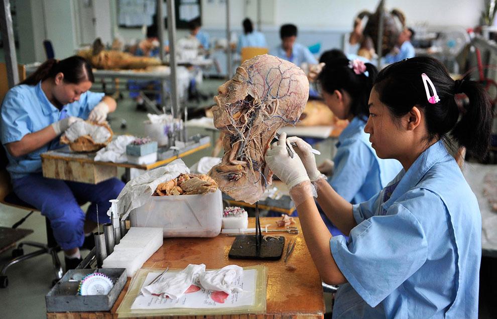 Лаборатория Dalian Hoffen Bio-Technique