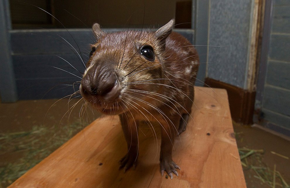 Животные, которые делают новости