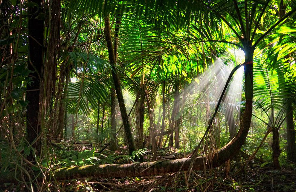 Тропический лес Эль-Юнке
