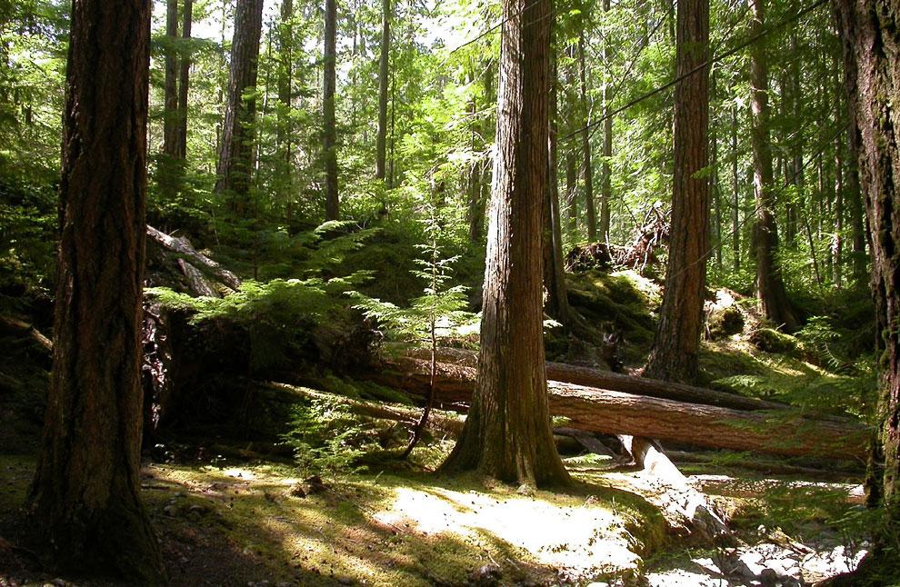 Леса в Британской Колумбии