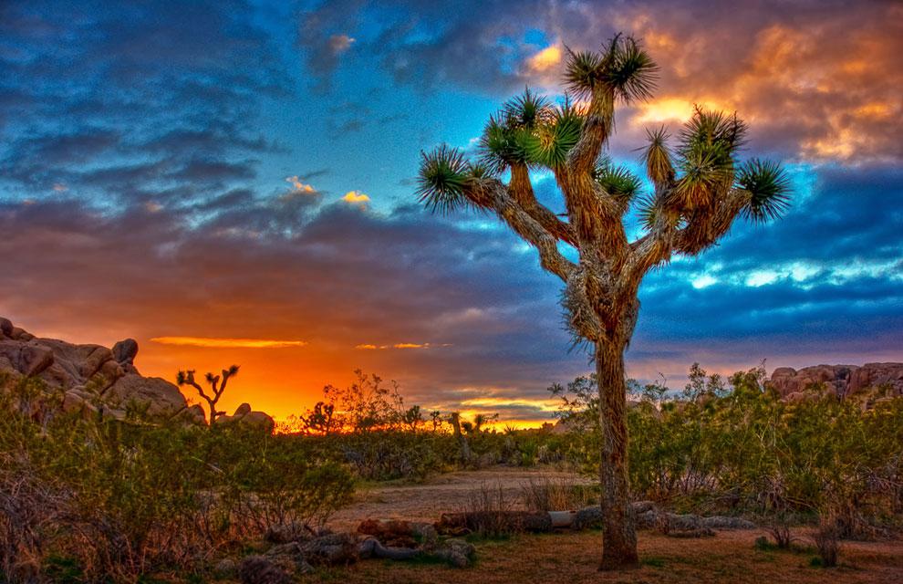 Национальный парк дерева Джошуа