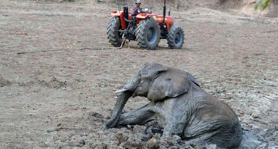 Спасение слонов в Замбии