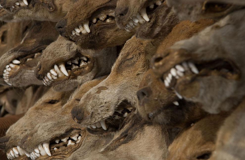 Лучшее с конкурса фотографии National Geographic 2011