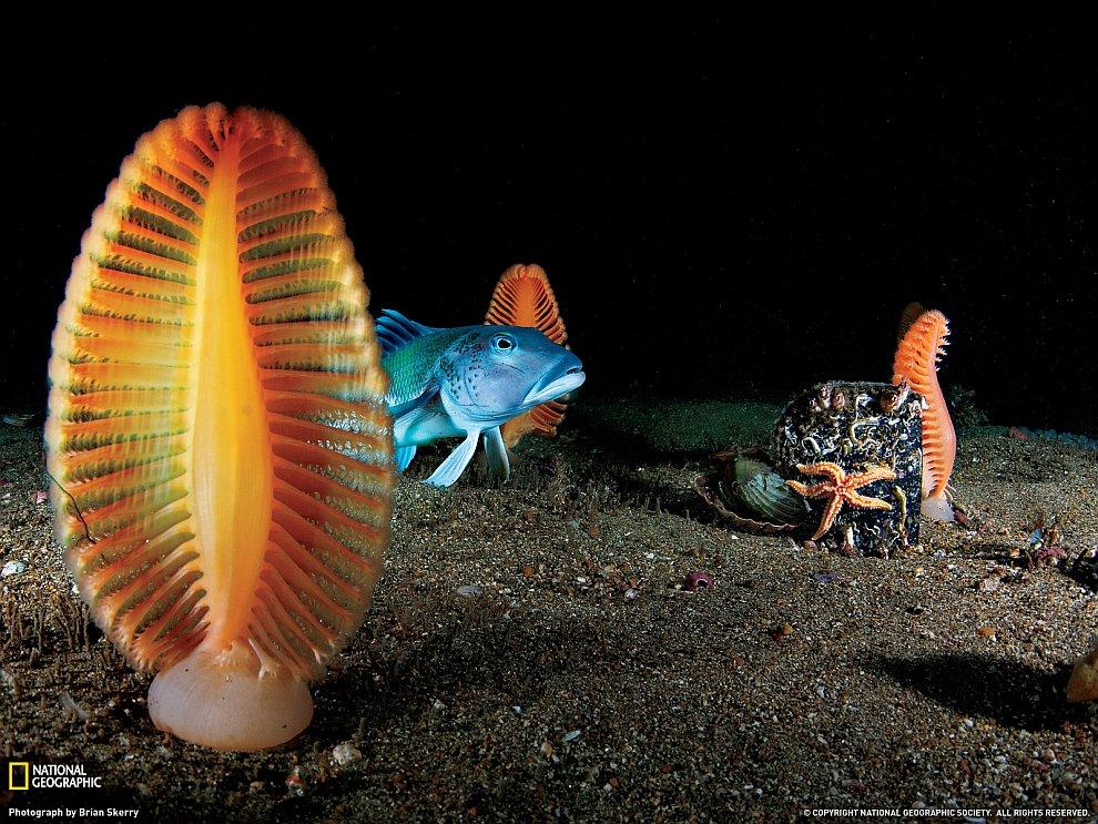 Морские перья, Новая Зеландия