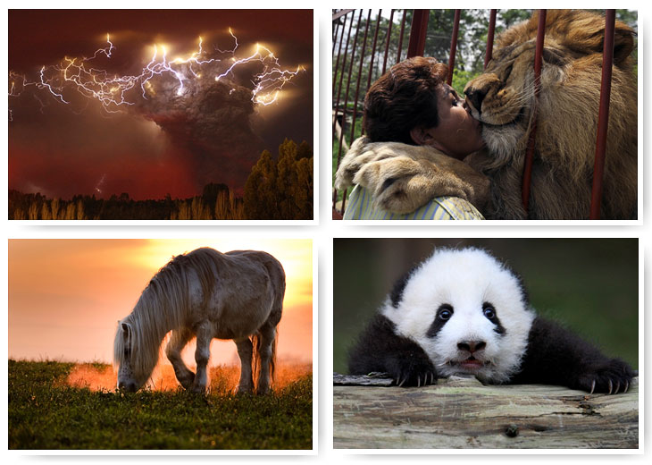Лучшие фотографии природы и животных 2011 года