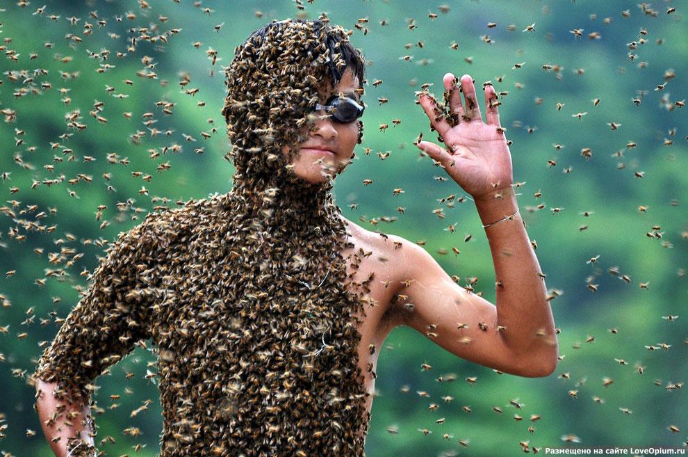 Килограммы пчел