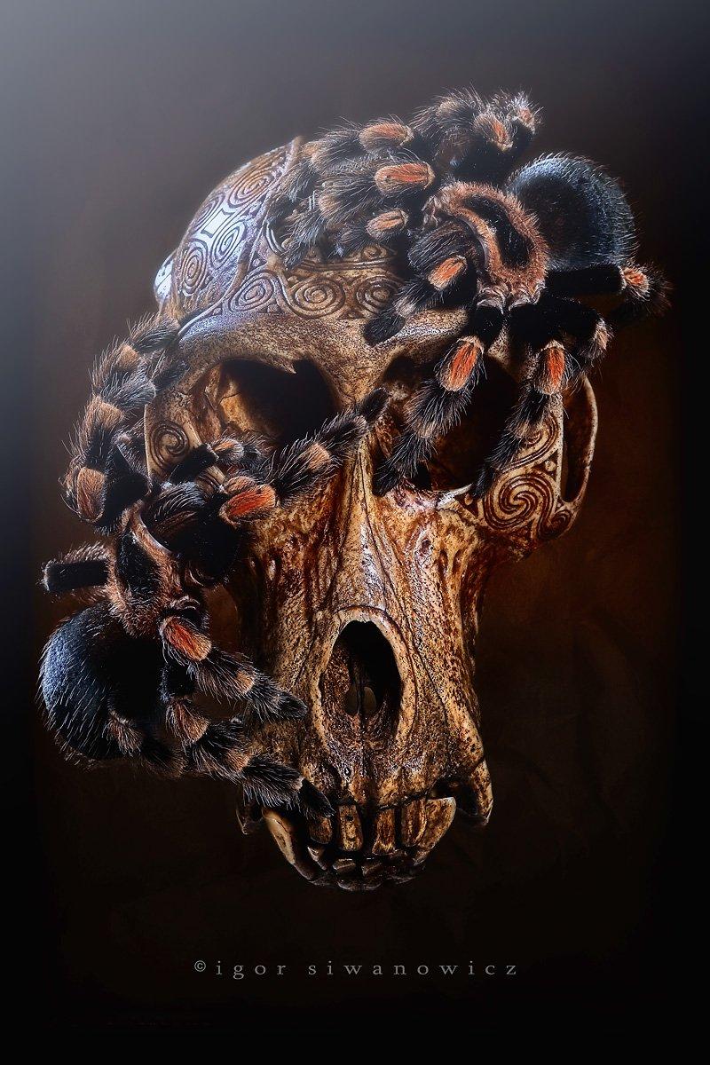 Захватывающий макромир «пришельцев из других миров»