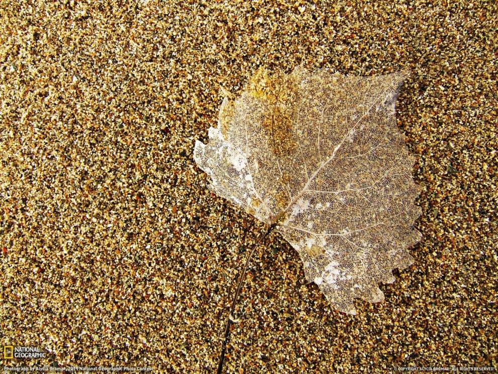 Лист на пляже