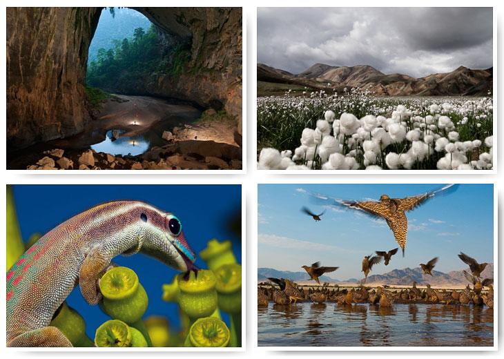 National Geographic: лучшие фотографии 2011 года
