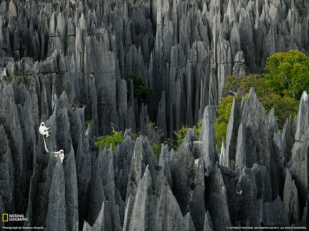 Лемуры на Мадагаскаре