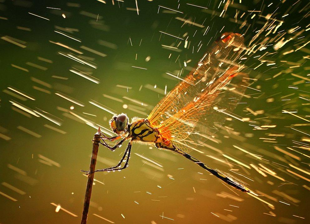 Победитель в категории «Природа» и победитель всего конкурса National Geographic 2011