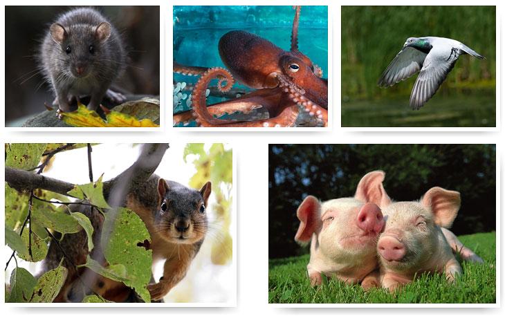 10 самых умных животных на Земле. Часть 1