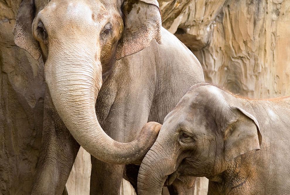 Хочу посмотреть на член слона 18 фотография