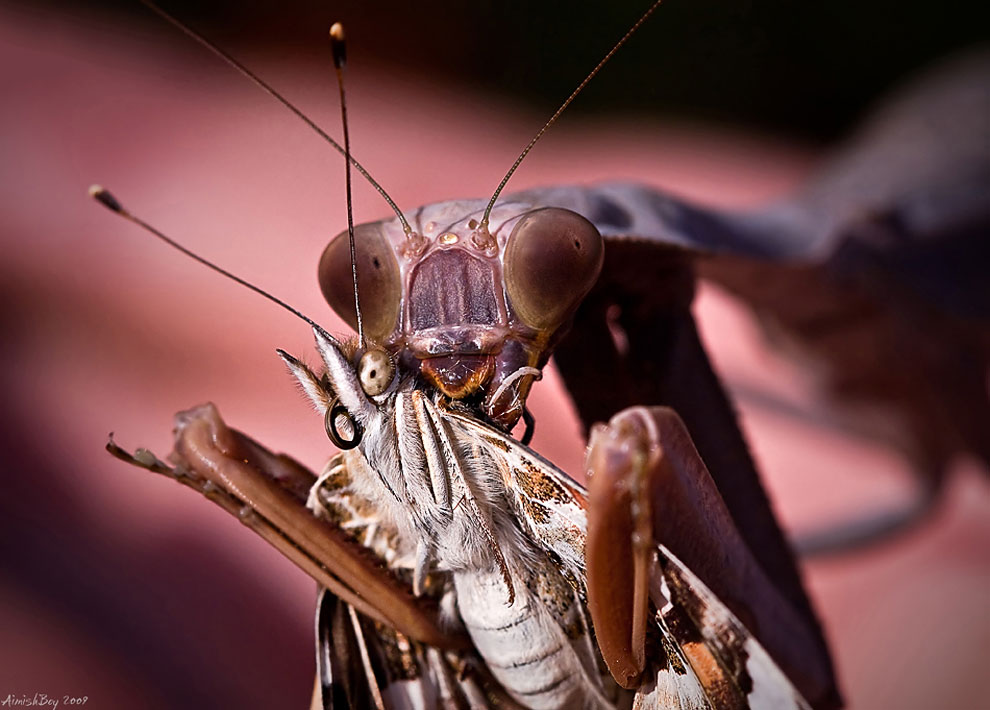 glamorous insects