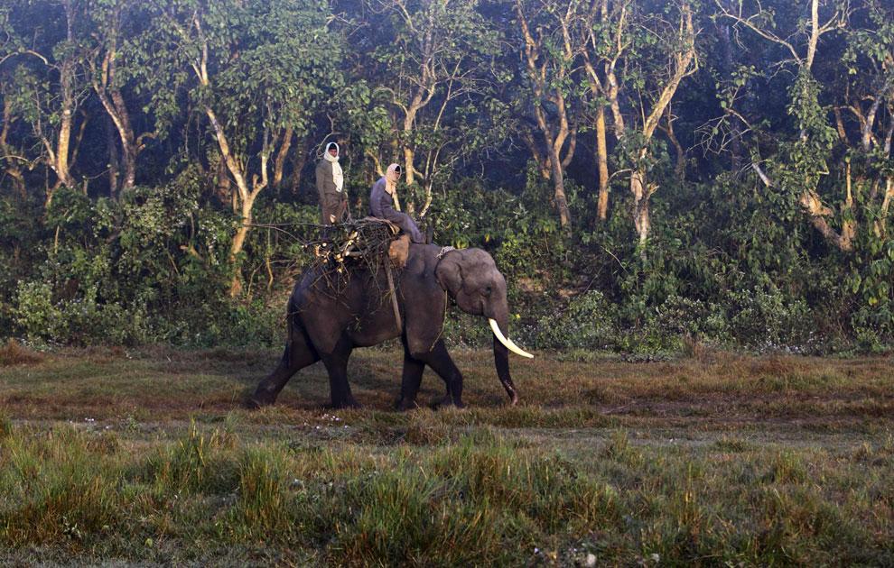 Слоны из Национального парка Читван в Непале