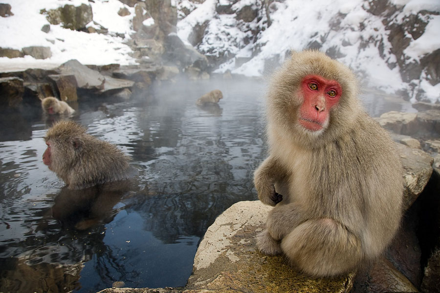 "Park of monkeys in ""Hell's Valley"""