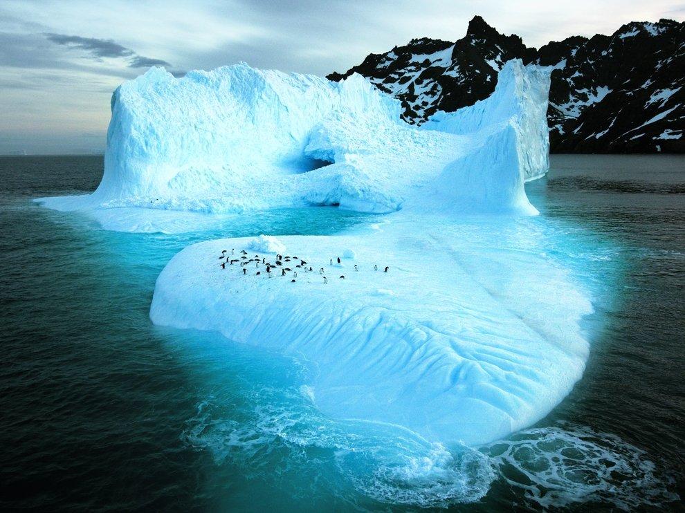 Айсберг у берегов Южной Гергии
