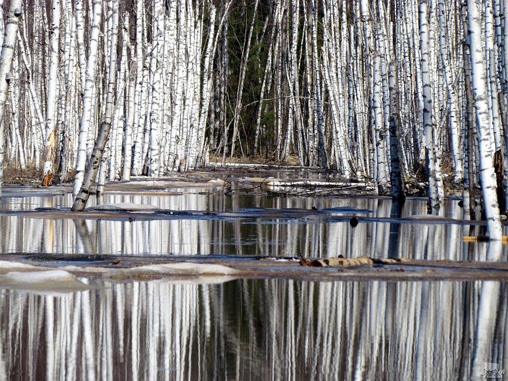 Лучшие фотографии России 2011 года: природа