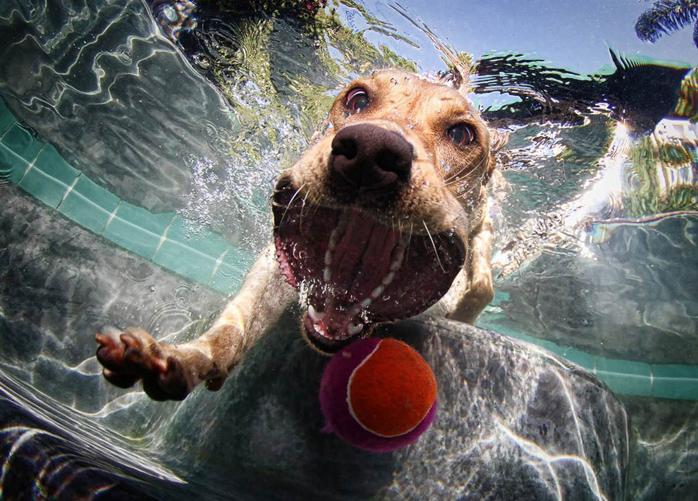 Подводные собаки
