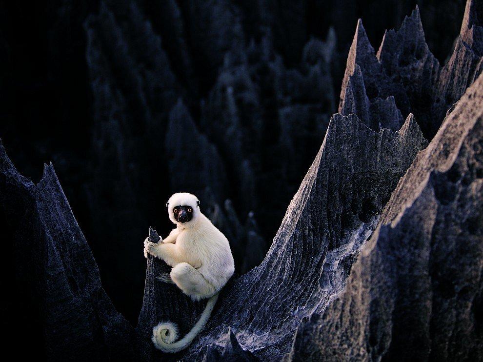 Сифака, Мадагаскар