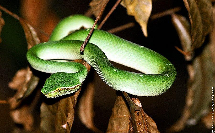 Животные национального парка Тангкоко в Индонезии