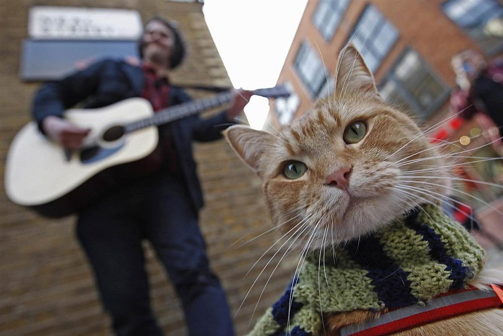 Уличный музыкант и его кошка