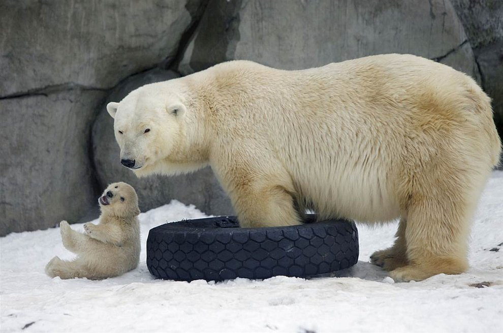 Мама медведь