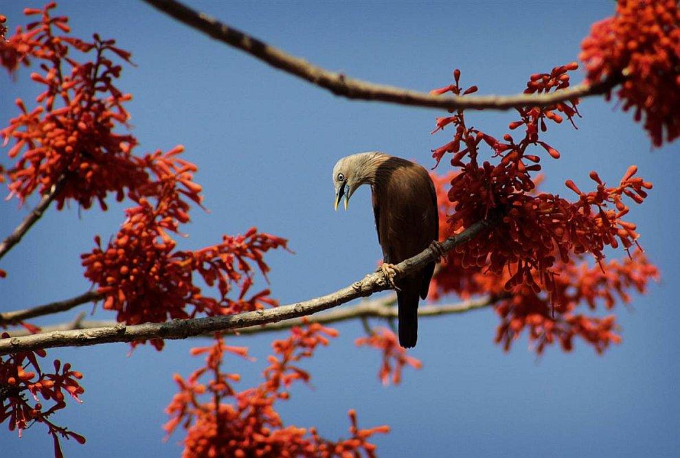 Птица собирает нектар