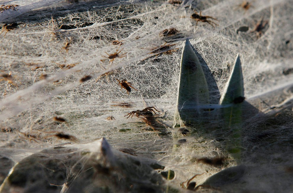 Нашествие пауков