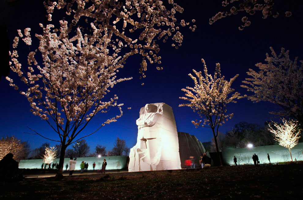 Фестиваль цветущей вишни в Вашингтоне