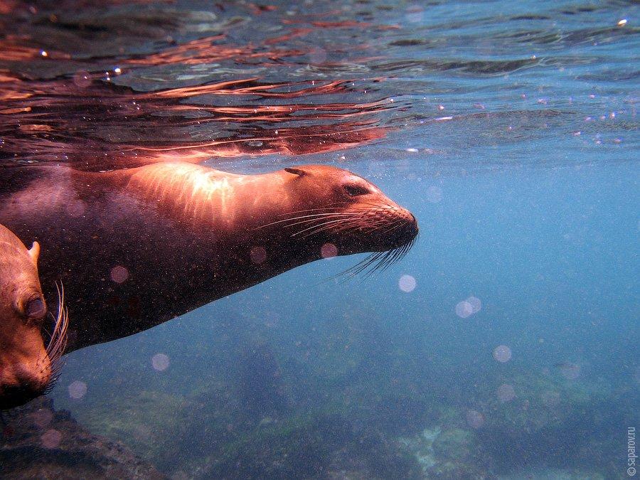 Путешествие на Галапагосские острова. Часть 2