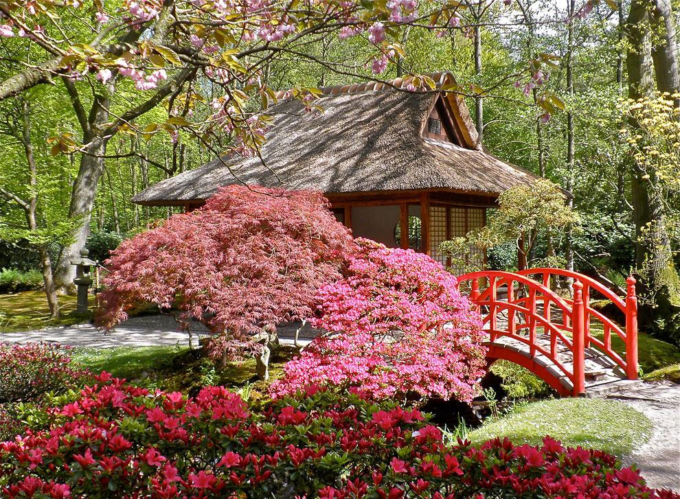 Японский сад города Гаага в Голландии