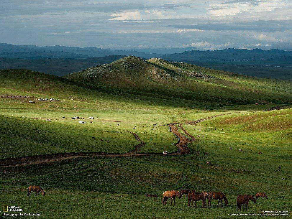 Лошади в монгольских степях