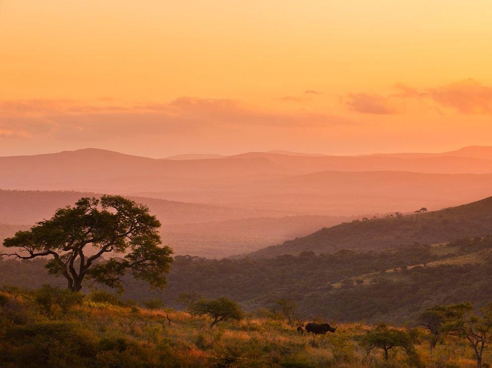 Носороги, Южная Африка