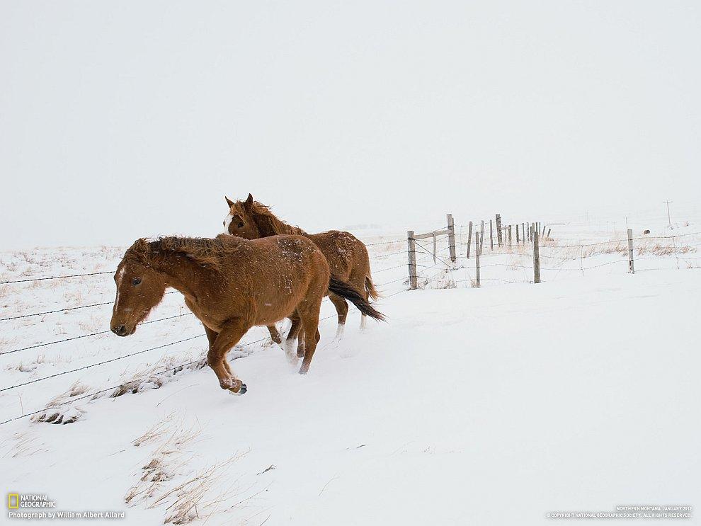 Лошади, штат Монтана