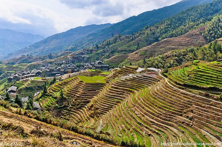 Рисовые террасы в Китае