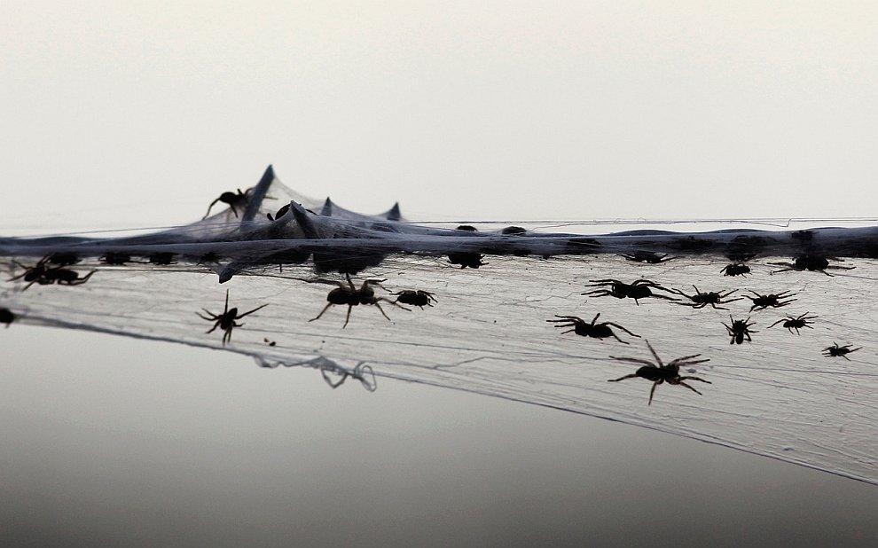 Нашествие пауков в Австралии