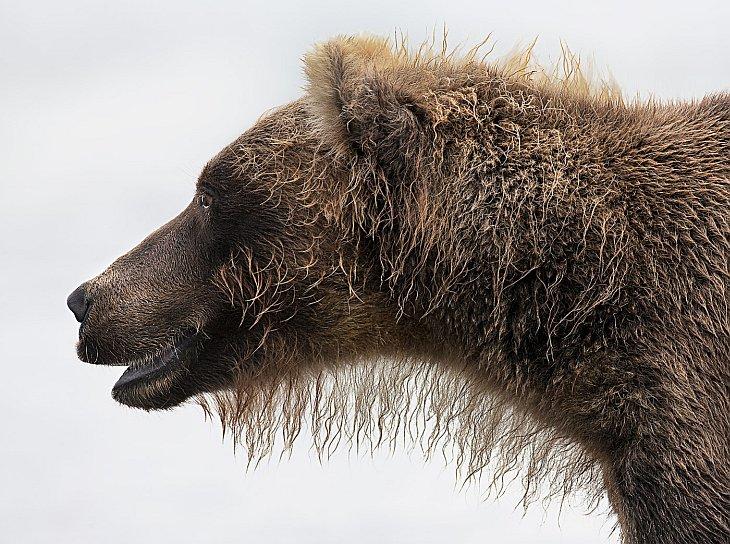 Лучшие фотографы дикой природы: конкурс «Золотая черепаха» 2012
