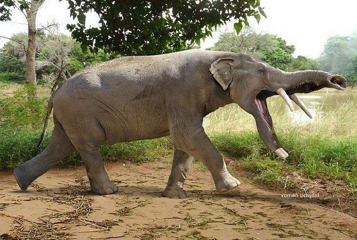 Картинки слона