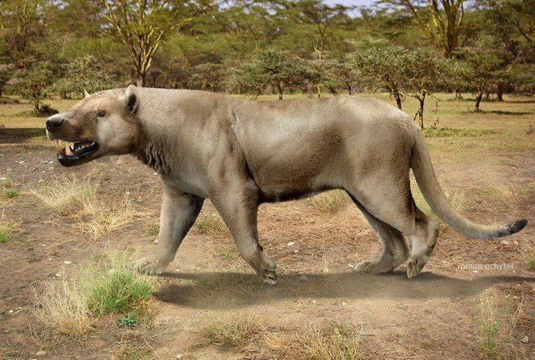 Жил от 20 до 15 млн. лет назад