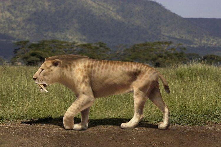Смилодон (саблезубый тигр)