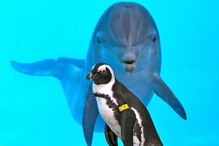 Дельфин и пингвин